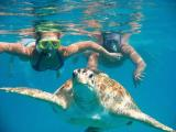 Snorkeling & Diving Tour In Ras Muhamed National Park Packages